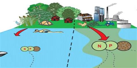 Nutrient Pollution Definition - Assignment Point