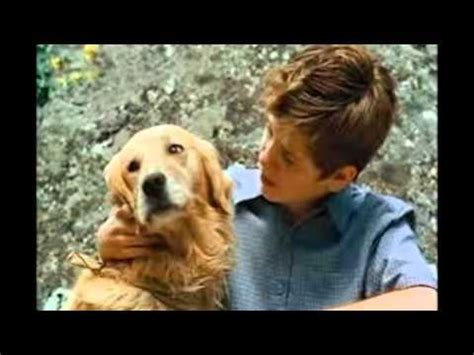 Top 13 bellissimi film sui cani - YouTube